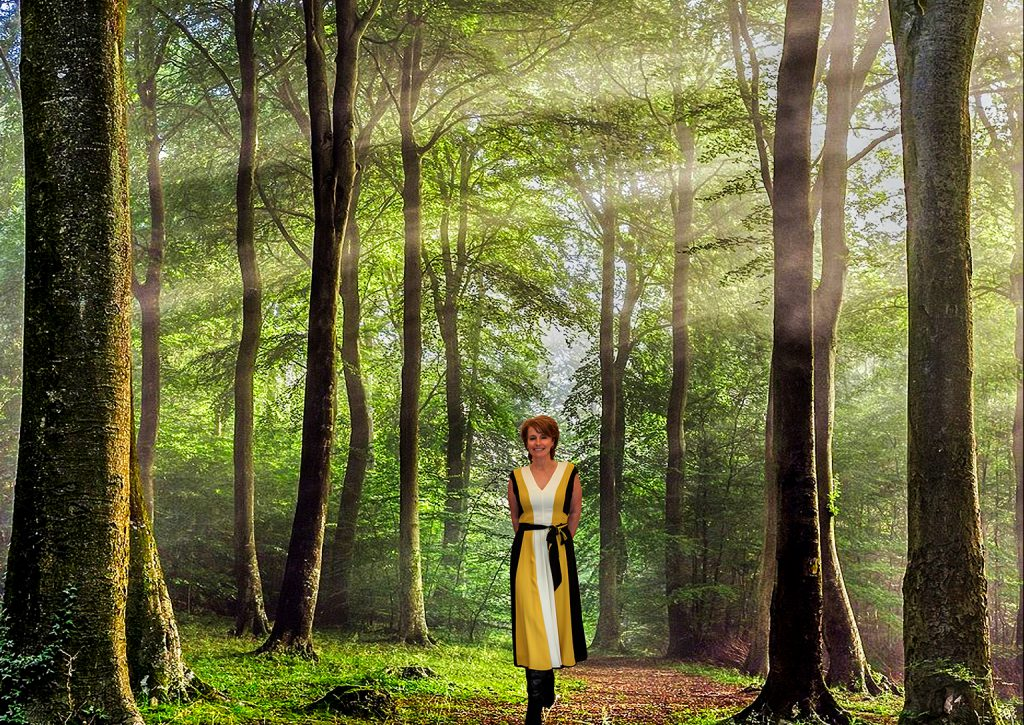 Forest_sunlight_HDR_2