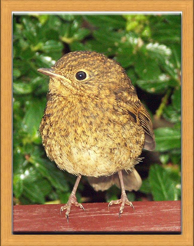 birdframe16