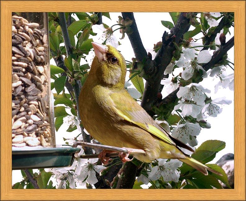 birdframe19
