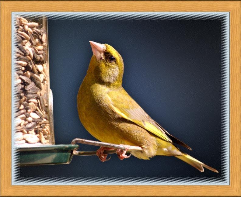 birdframe21