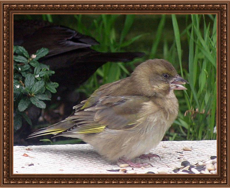 birdframe43