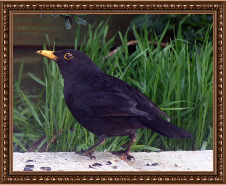birdframe45
