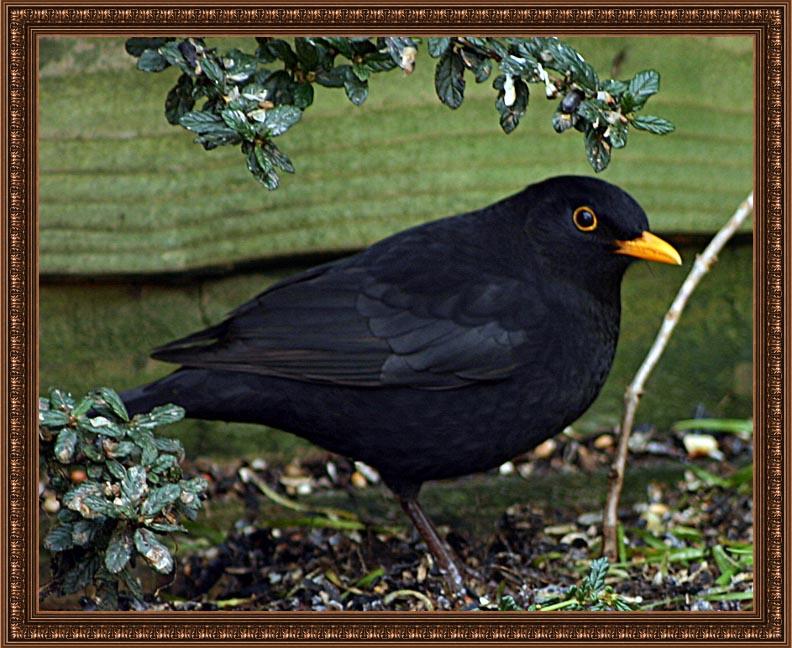 birdframe53
