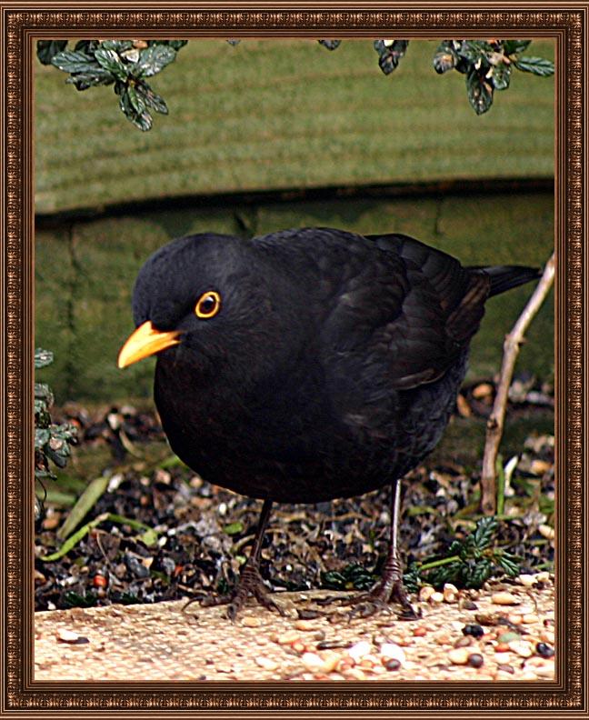 birdframe54