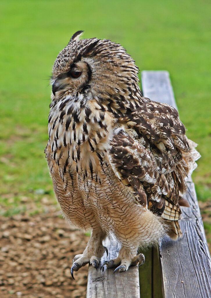 birdsofprey (11)