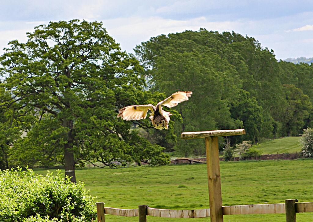 birdsofprey (14)