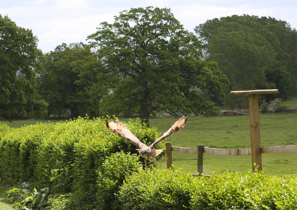 birdsofprey (15)