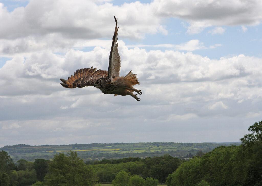 birdsofprey (17)