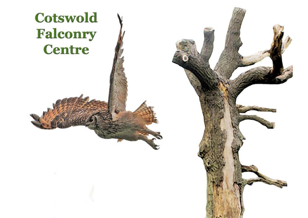 birdsofprey (17)-2-sk