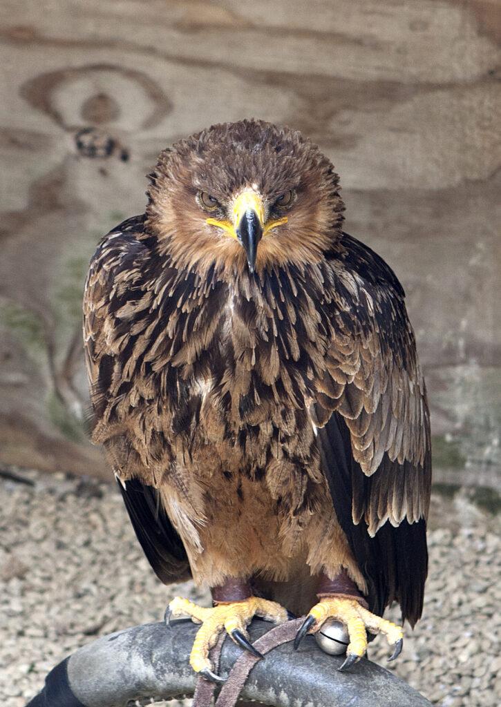 birdsofprey (3)