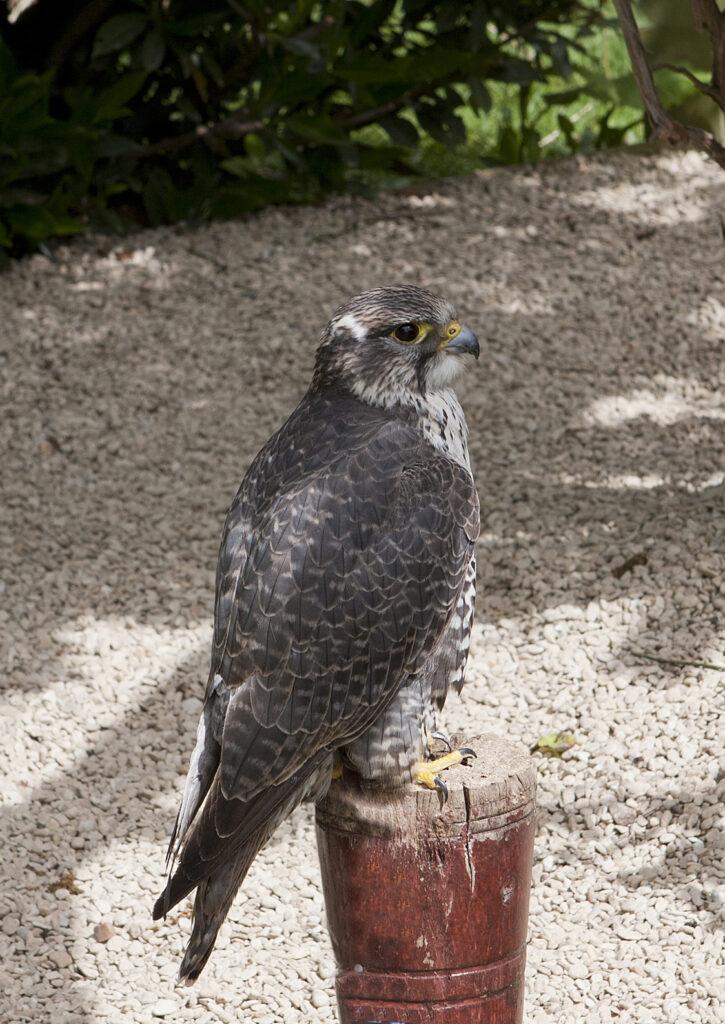 birdsofprey (5)
