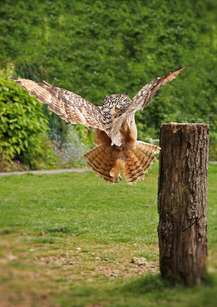 birdsofprey (6)-2